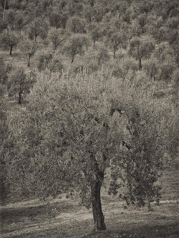 Grove at Domenica Fiore