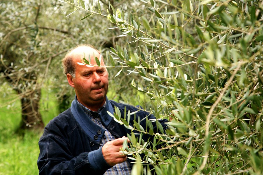 The Olive Producer