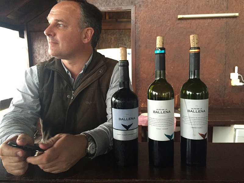 Alto de la Ballena winery