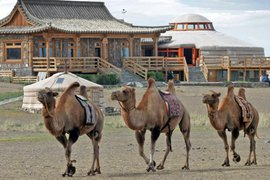 Three Camel Lodge