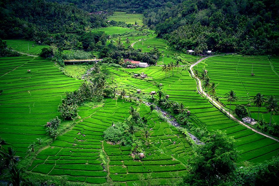 "Bali rice terraces. Photo: <a title=""Riza Nugraha Flickr"" href=""http://www.flickr.com/photos/rnugraha/1424205798/"" target=""_blank"">Riza Nugraha</a> / Flickr"
