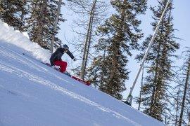 Bode Miller for Bomber Ski