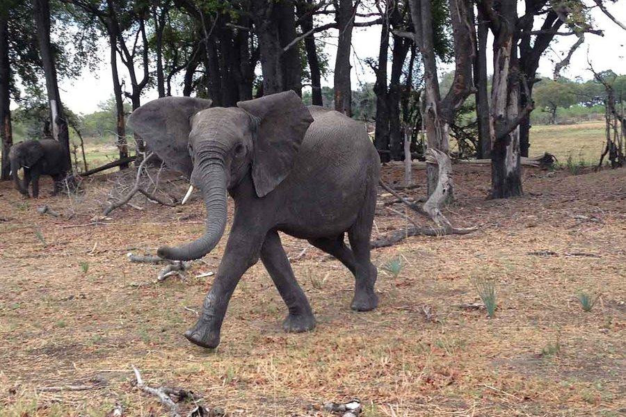 A Cheeky Elephant