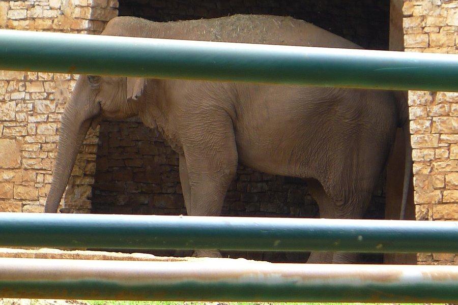 Lanka, the Shy Elephant
