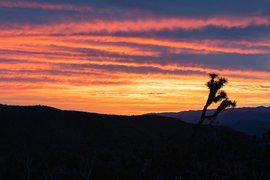Sunrise, Joshua Tree, California