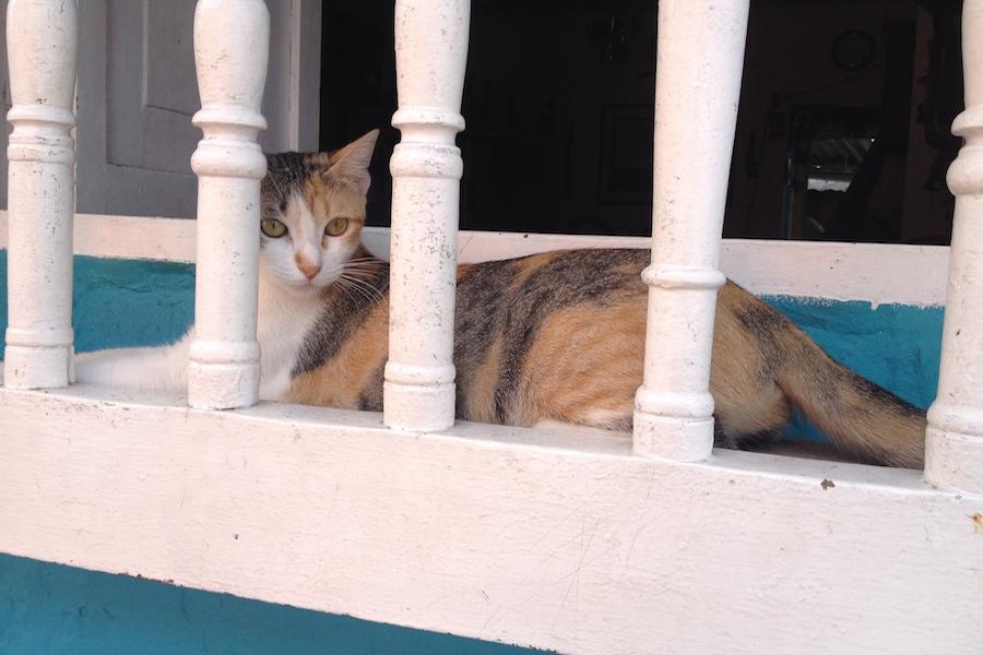 Cartagena Gato
