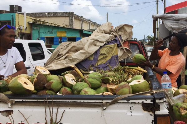 Coconut Juice Castries Market