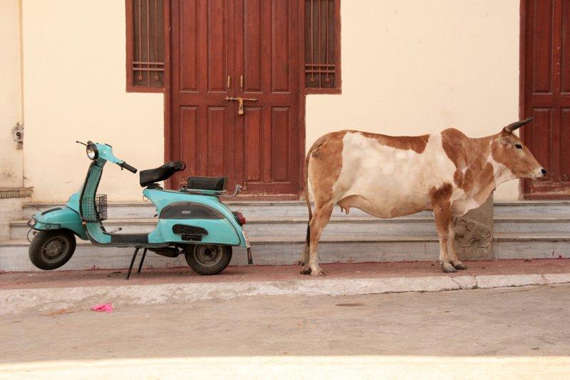 Udaïpur, Rajasthan, India (2008)