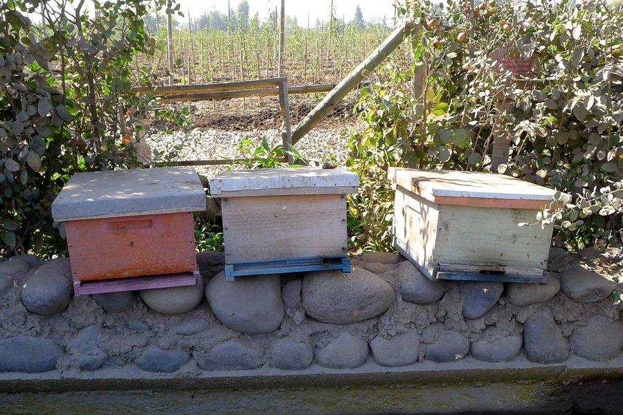 Farm Labor: Bees