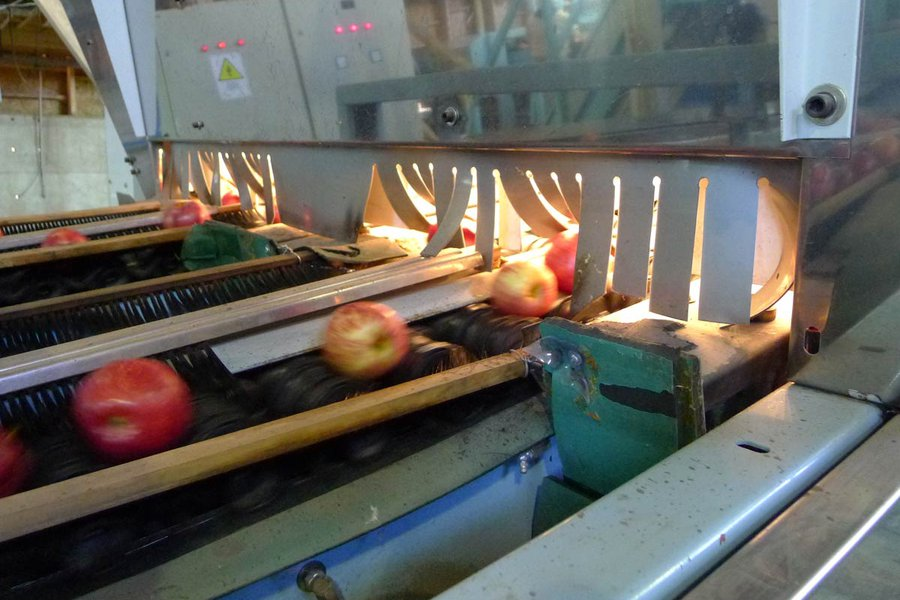 Good Apples Move Along the Conveyor Belt