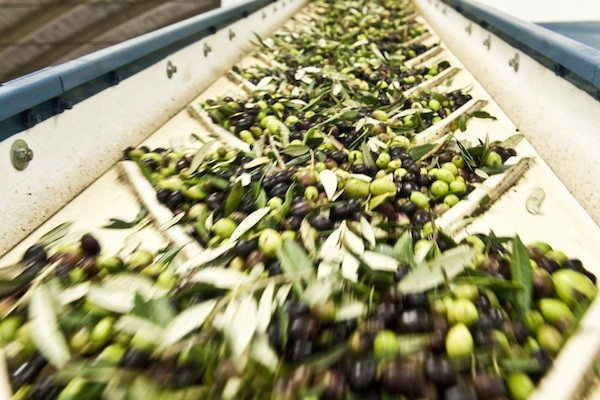 Chocolate Had an Affair with Olive Oil in Italy - Fathom