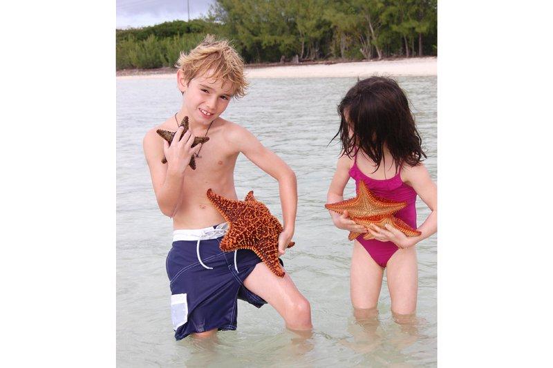 Finding starfish on Harbour Island, Bahamas