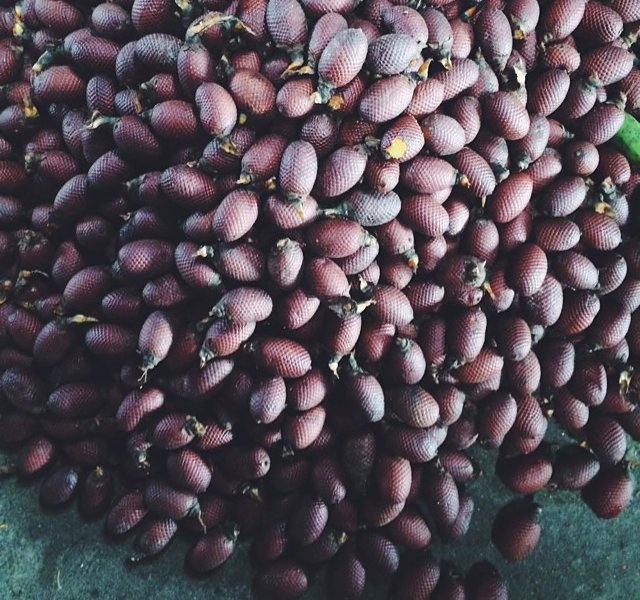 Fruta de la Palma