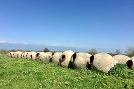 Qvevri, ancient earthenware vessels used in Georgian winemaking. All photos by Jeralyn Gerba.