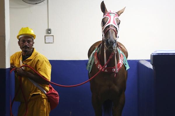 Horse at Jóquei Clube