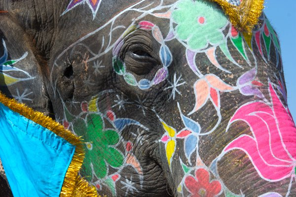 """<p>Get the elephants to hair and make-up. Photo: <a title=""""Flickr"""" href=""""http://www.flickr.com/photos/kj-an/3064180023/"""" target=""""_blank"""">kevin.j</a> / Flickr</p>"""