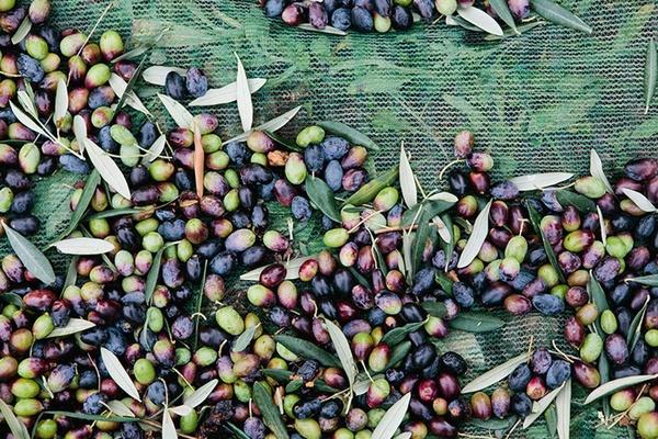 Nicole Franzen Italian Olives