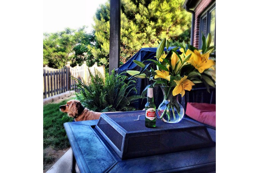 "25 bags of mulch, 16 plants & a scorching sunburn...time for a Stella...and a husband... Photo by <a title=""mollylhoward"" href=""http://instagram.com/mollylhoward"" target=""_blank"">@mollylhoward</a>"