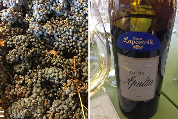 Lapostolle Wines