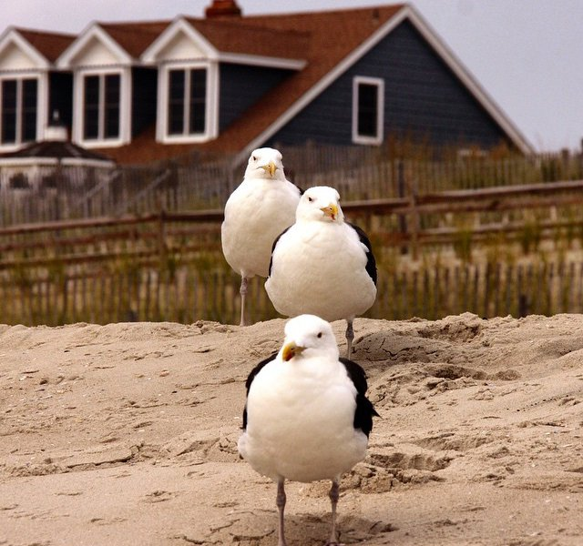 Seagulls in Cape May