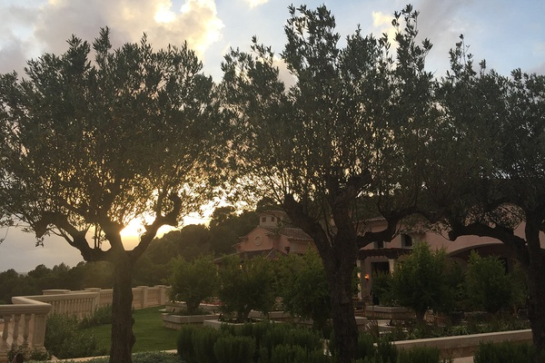 Olive Tree Terrace at Park Hyatt Mallorca