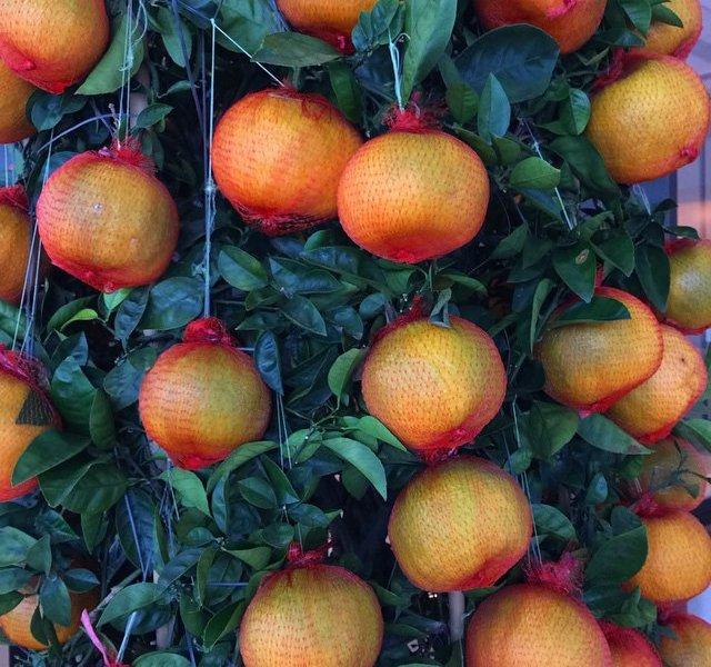 Lucky Tangerine
