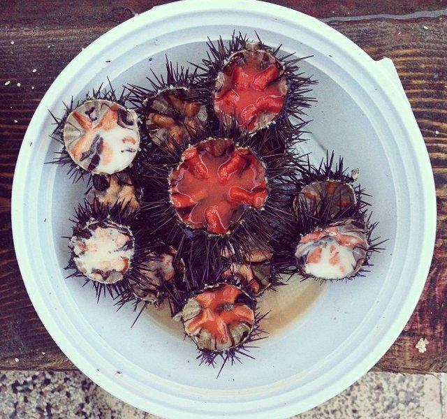 2. Sea Urchin