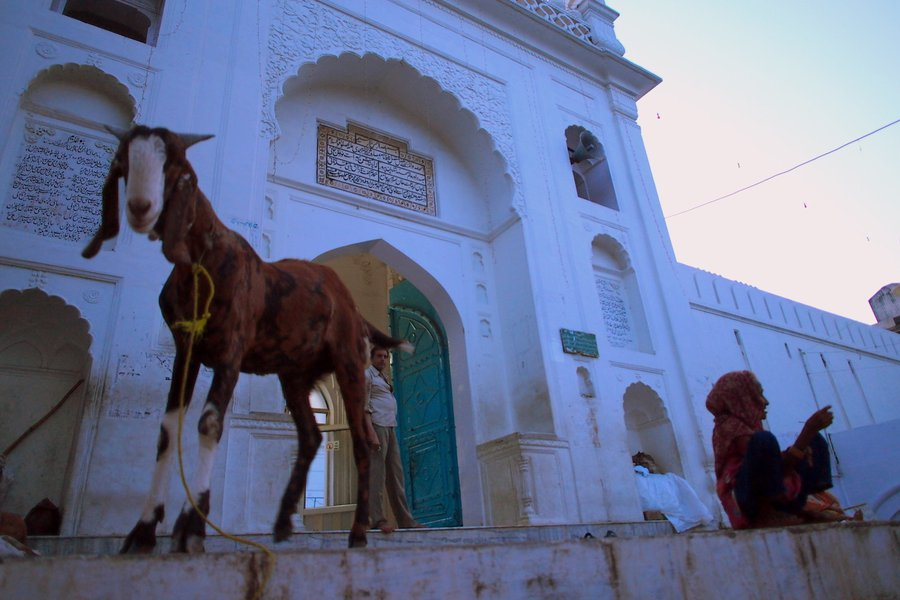 A giant goat guards the entrance of the Upper Court City mosque in Aligarh, north India.