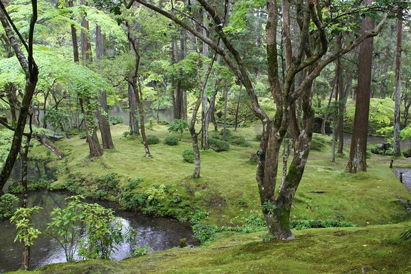 The garden at Saiho-ji Temple in Kyoto