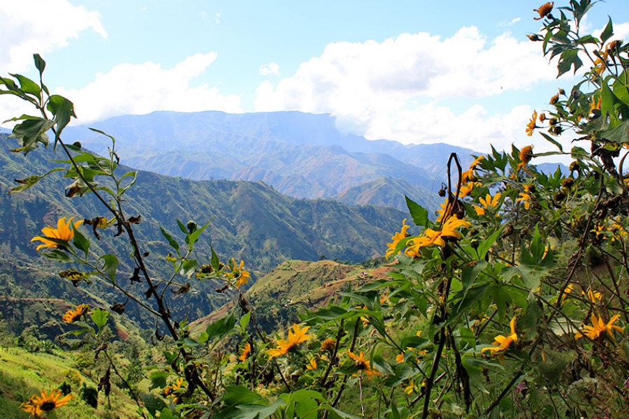 Mountain and flowers Haiti