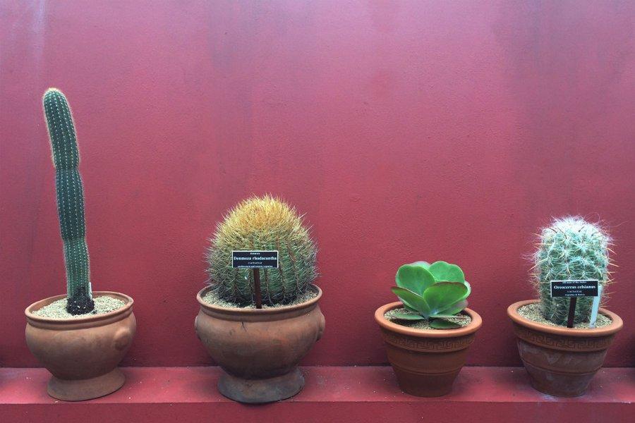 Cacti Lineup
