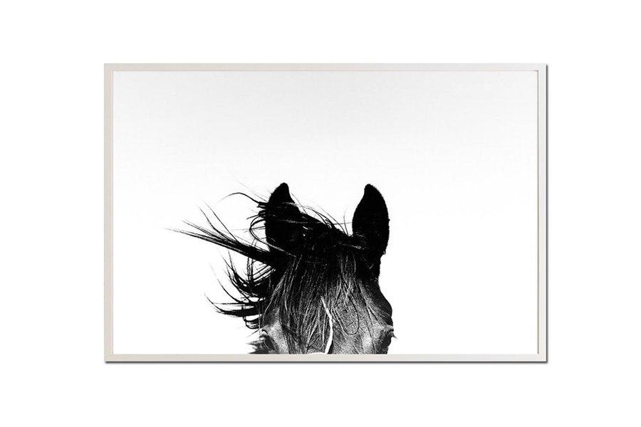 Pampa Horse Print