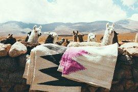 Pampa Puna Rugs
