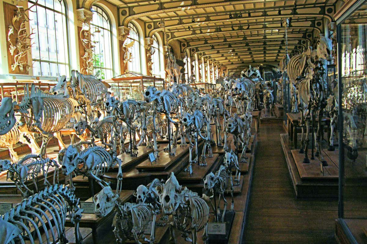 Best Paris Museums Gallery Of Paleontology And Comparative Anatomy