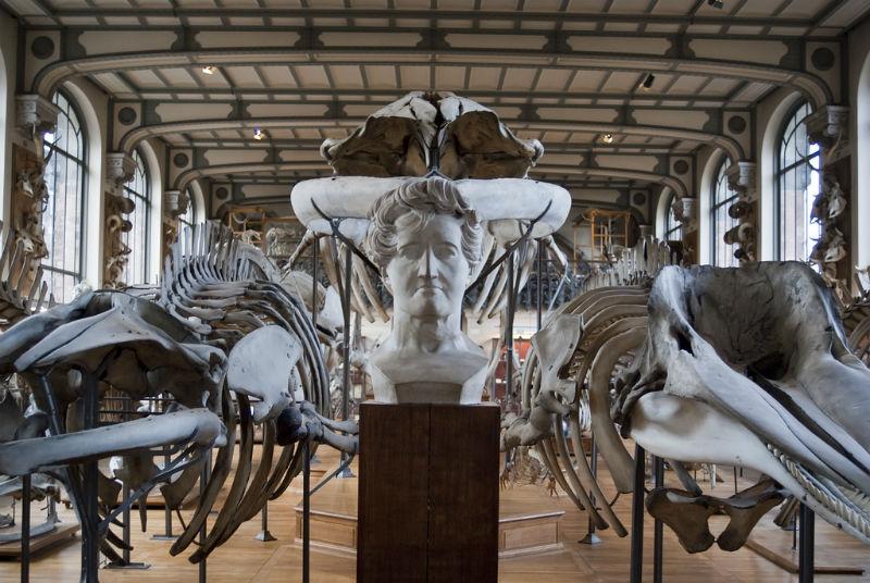 Bust & Skeletons