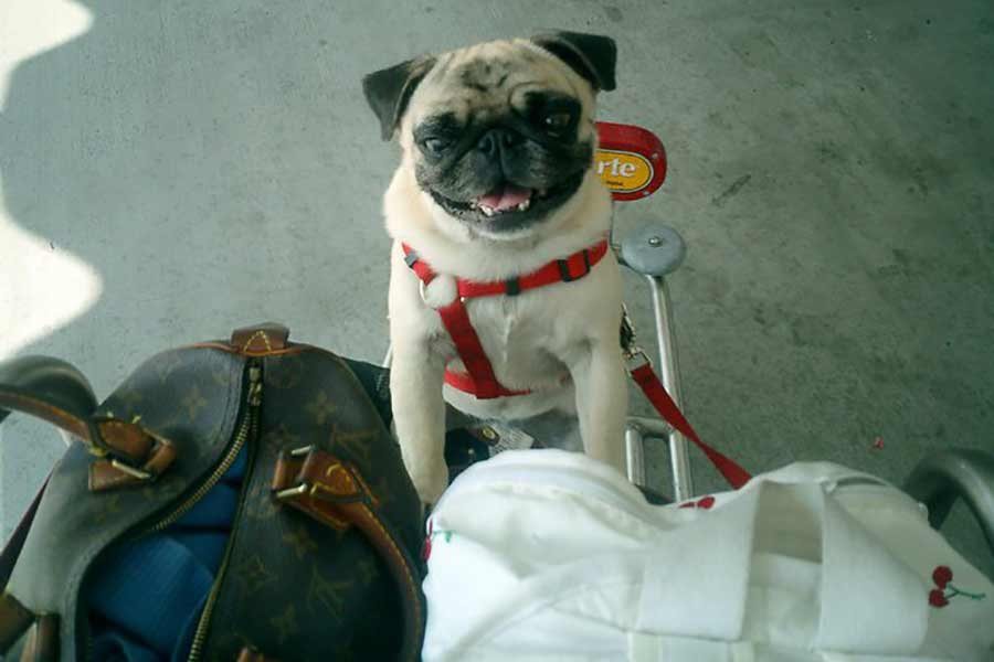Fathom How Much Is That Doggy In Your Luggage A Quick Guide To - How much is a fathom