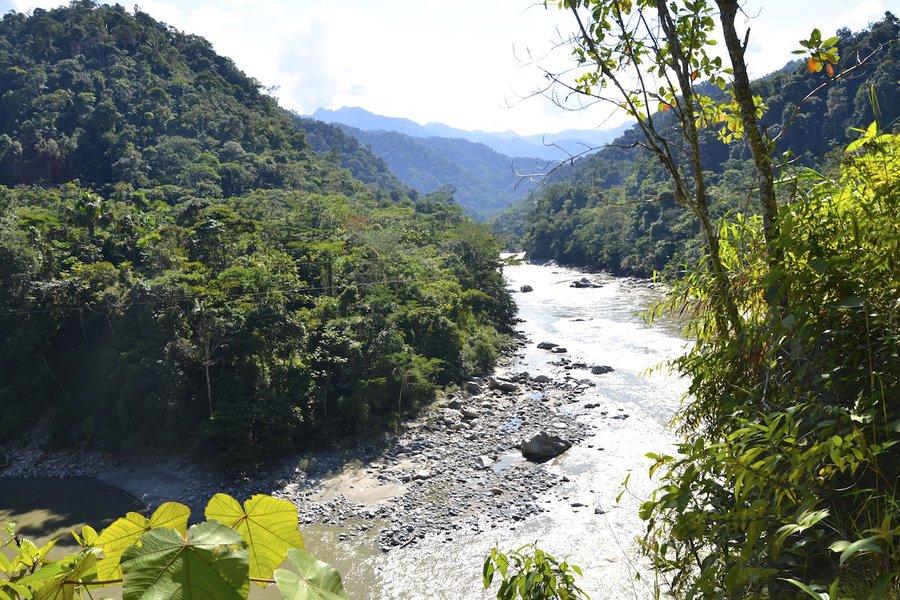 Fathom Runa Amazonian Energy Drinks