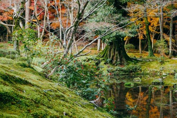 Saiho-ji Kyoto