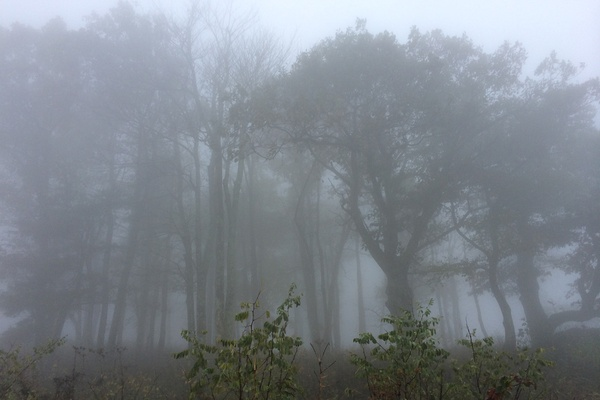 Shenandoah Mountain Fog