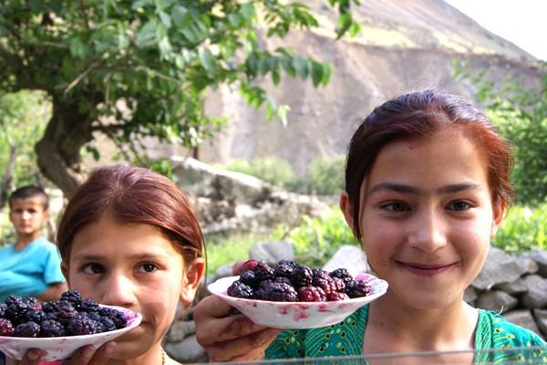 Taikistan cherries