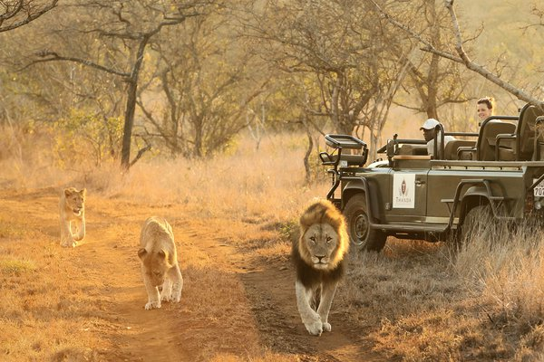 Thanda Safari, South Africa