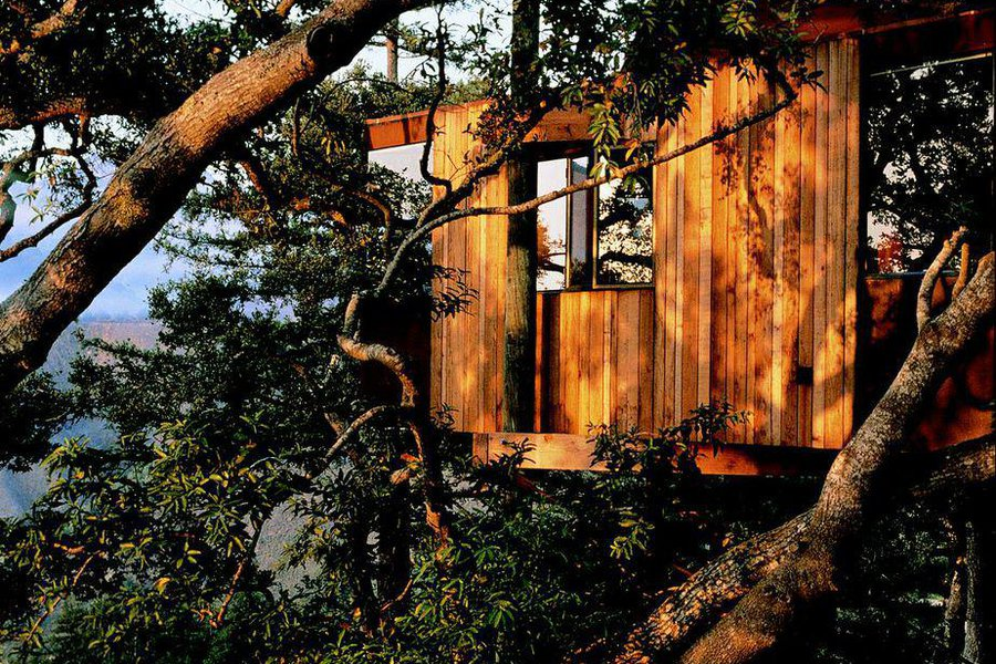 Perched On Redwoods