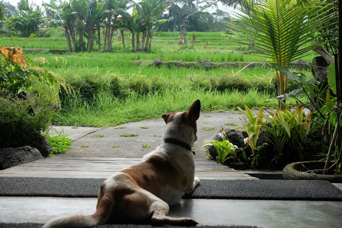 Simon's dog Tumeric