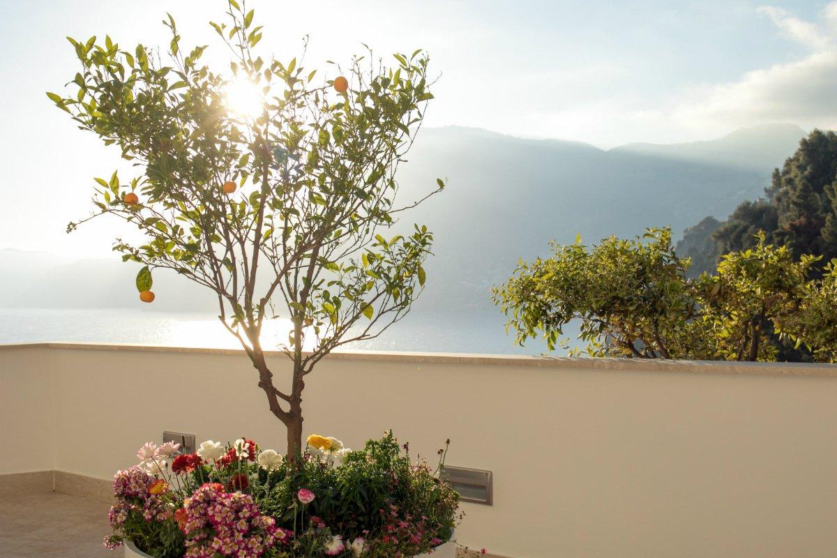 Casa Angelina lemon tree