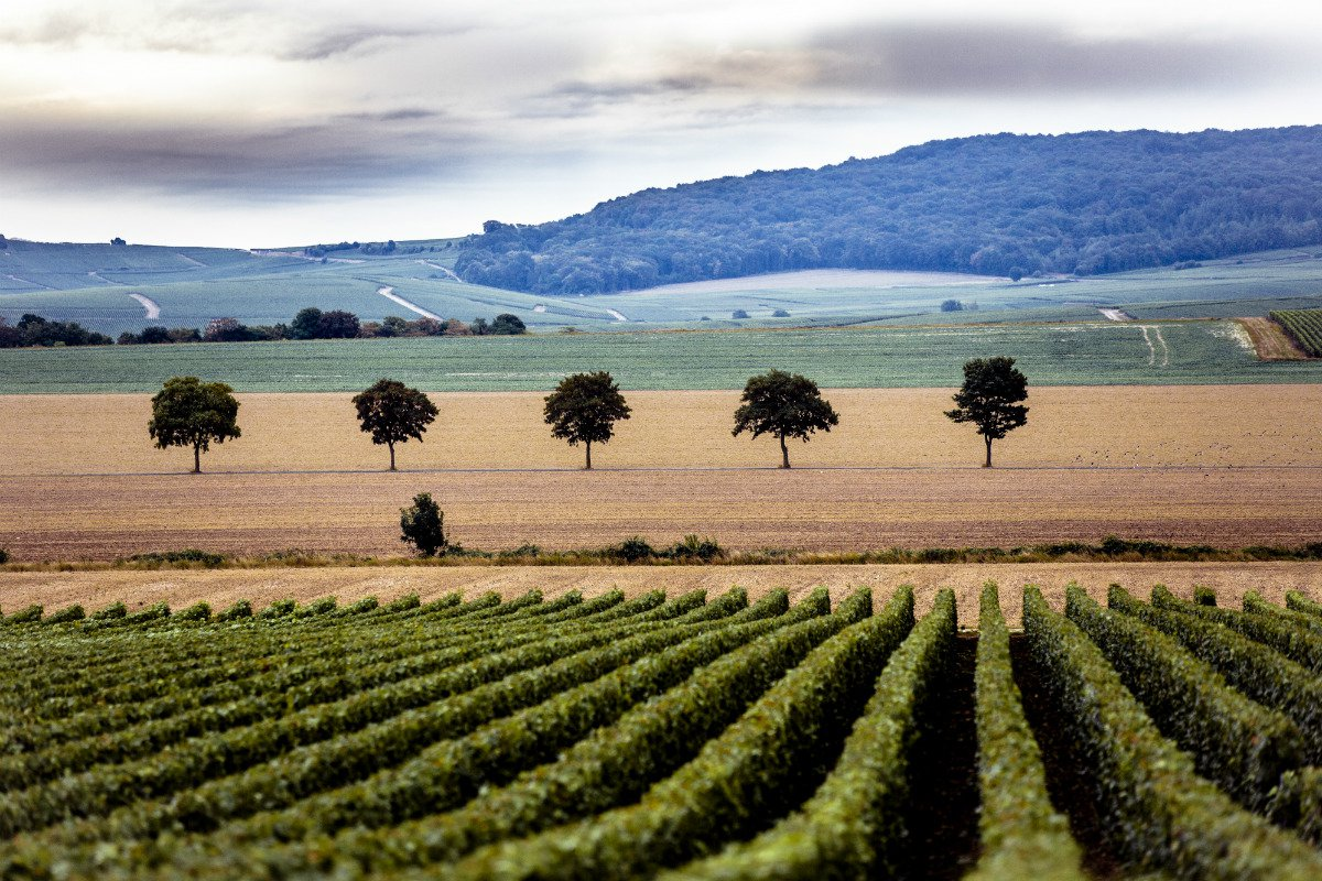 Champagne Valley