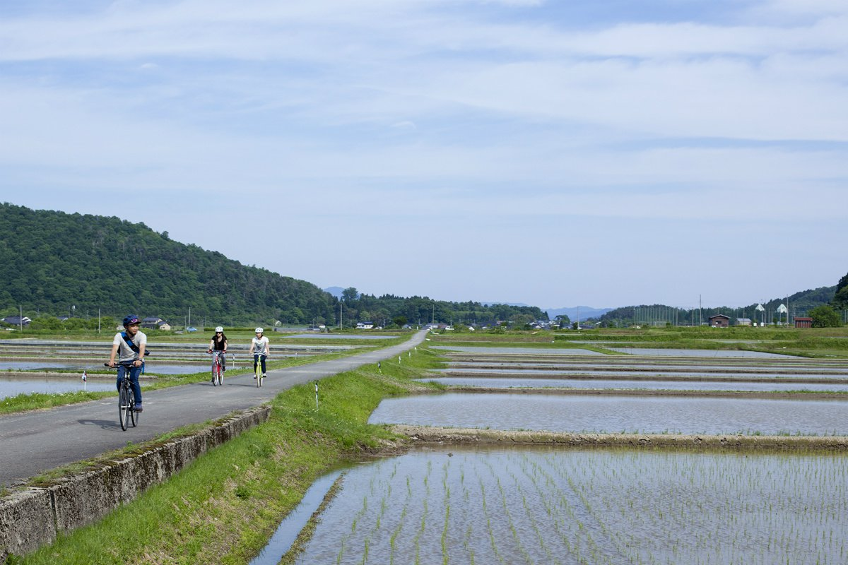 Bicycle riding through rice fields
