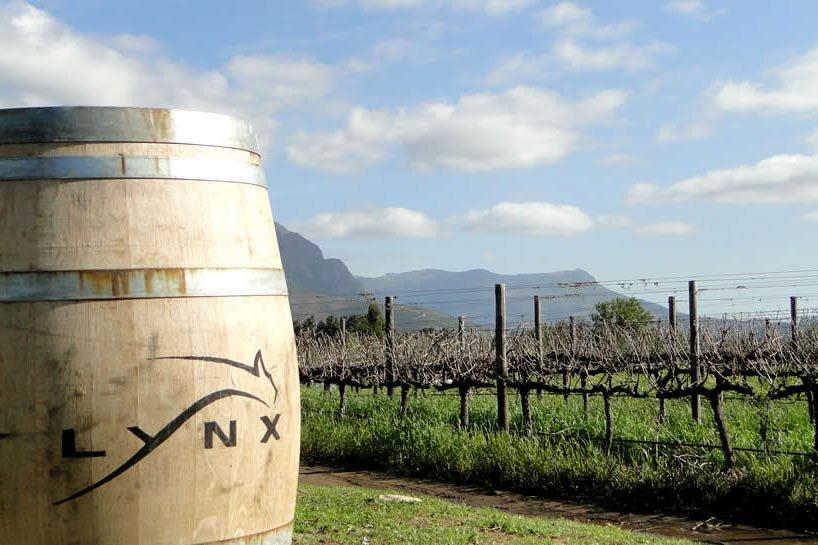 Lynx Winery