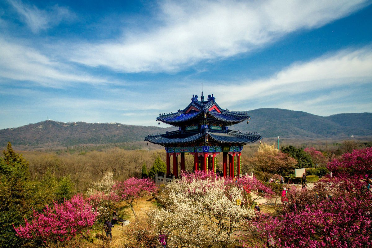 Plum Blossom Hill, Nanjing, China.