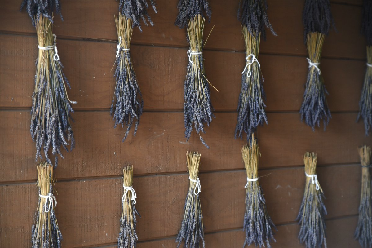Lavender at Willows Inn