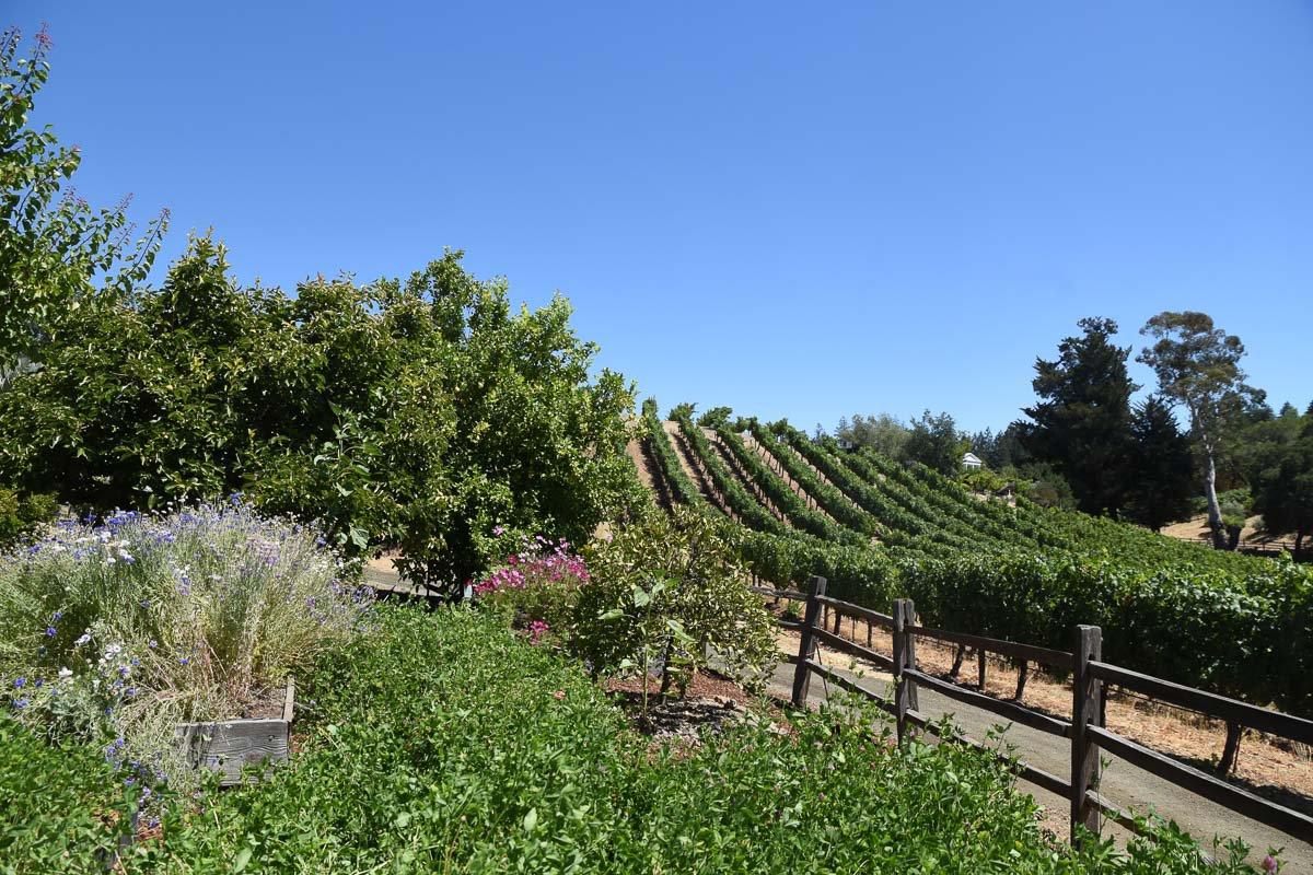 Beringer's Winery